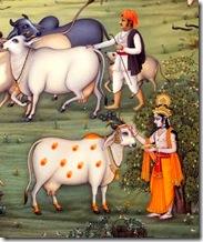 Lord Krishna grew up in the village of Vrindavana