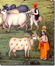 Lord Krishna grew up in the village of Vrindavana