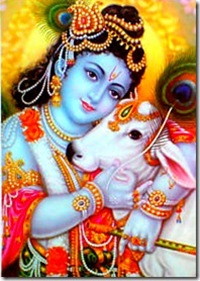 Krishna with cow