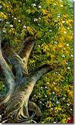 A tree in Vrindavana