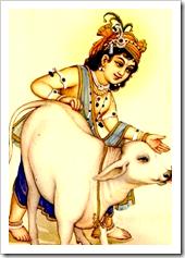 [Lord Balarama with cow]