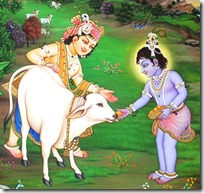 [Krishna and Balarama with cows]
