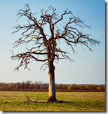 [dying tree]