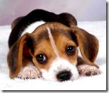 [cute dogs]