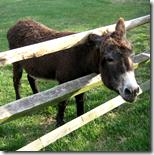 [donkey]