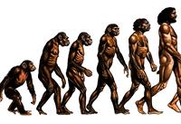 [evolution]