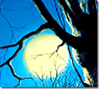 [The moon through branches]