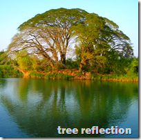 [tree reflection]