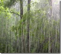 [heavy downpour]